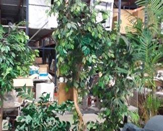 Many DECORATIVE TREES 25.00