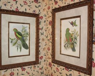 artwork parrots