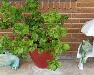 plants, garden decor