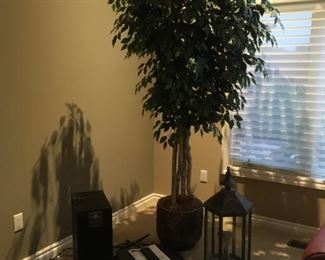 . . . a nice artificial ficus tree with assorted compliments surrounding it.