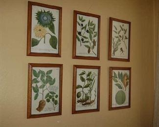 Botanicals  from Belgium