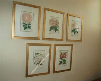 Handcolored floral botanicals