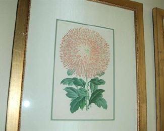 Floral botanicals
