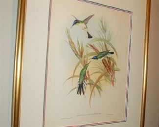 One of four Gould bird prints