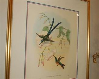 Handcolored Gould birds