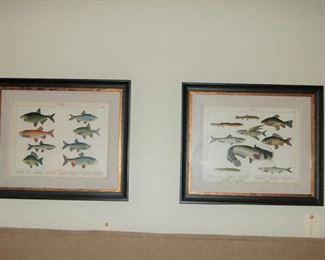 Framed chromographs of fish