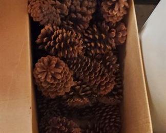 Box of Pine Cones