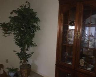 artificial ficus tree & a great curio cabinet