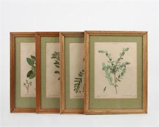 141: Four Redoute Engravings, Traite des Arbres et Arbustes
