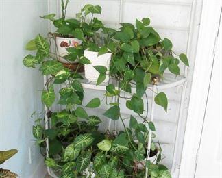 Bakers Rack... Live Plants...