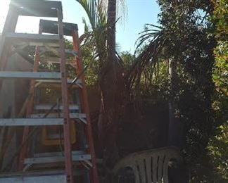Potted Palm Tree