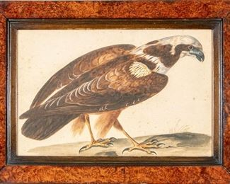 Pen & Watercolor Of A Bird, Late 18th/Early 19th Century