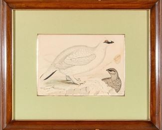 Framed Drawing Of Two Birds, Dated 1854