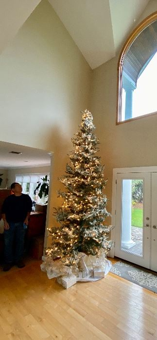 Jose is wondering how he is gonna get this tree out when it sells!