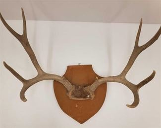 """1025: Antler Wall Mount Measures approx 21""""x26"""""""