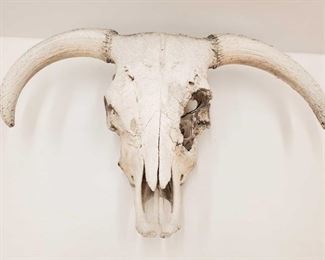 """1027: Skull Measures approx 30""""x20"""""""
