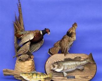 Fish and Bird Mounts