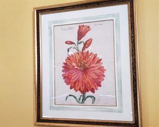 Framed hand colored botanical