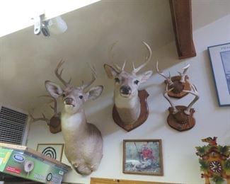 deer and rack mounts