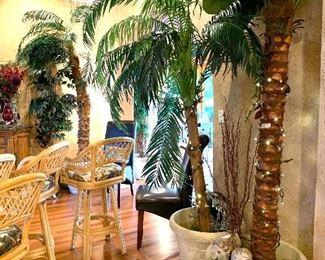 Huge Decorative Palm Trees