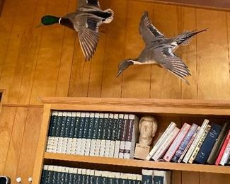 Taxidermy ducks and pheasant
