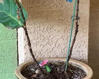 Lg Rolling Pot/Plant