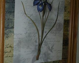Picture of iris