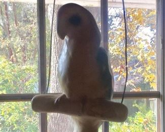 Yes, a parrot on a perch in a window in the house.