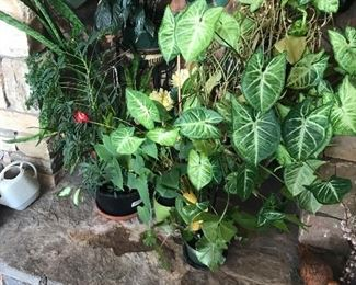 Florals/plants