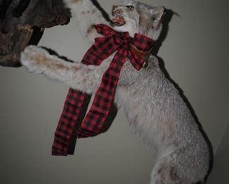 """""""Lynx Catching Bird"""" Taxidermy"""