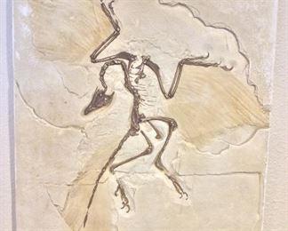 "Fossil Cast, 14"" x 17 1/2"""