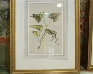 22 1/2 x 17 1/2 framed botanical print