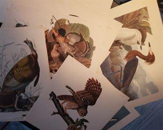 bird, prints, owl, grouse, heron, nature