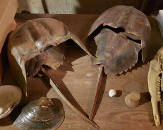 shells, skull, armor