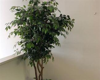 Silk Ficus https://ctbids.com/#!/description/share/293098