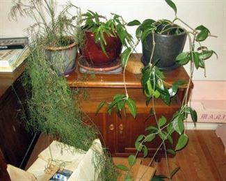 Kitchen Area: Plants, Vintage Side Table