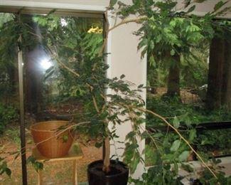 Kitchen Area:  Tree, Plants