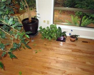 Kitchen Area:  Plants