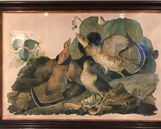 Large Antique Audubon  print