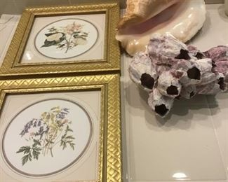 Pr. of floral pictures, Large Sea shells