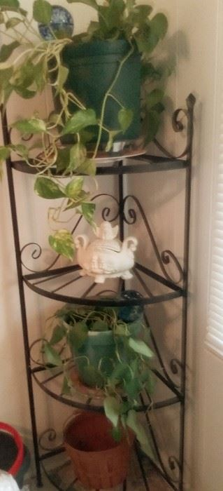 Wrought iron corner plant stand with plants for sale