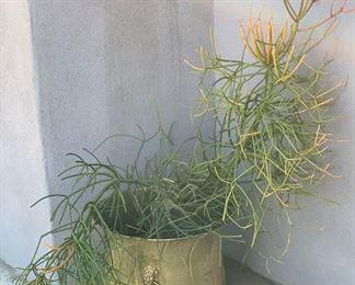 Gold pot  w/ Plant