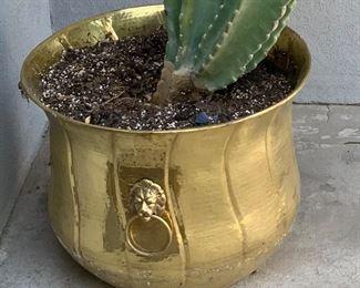 Gold pot  w/ Cactus