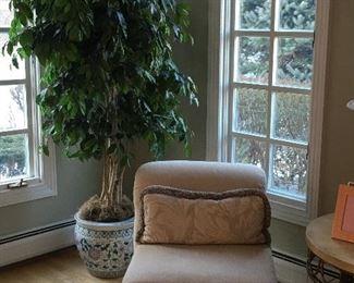Decorative Indoor Plants