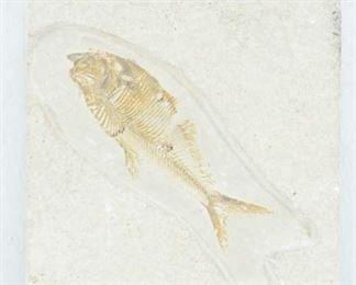 Fossil Specimen Fish In Sandstone