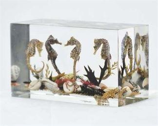 Coastal Seahorse & Seashell Specimens In Lucite