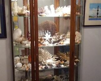 Huge Shell Collection