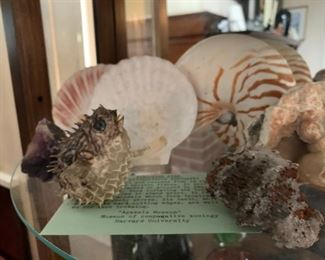 Porcupine Fish, Sea Shell Collection, Geode Collection
