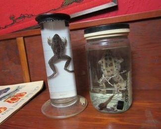 Vintage frogs in formaldehyde