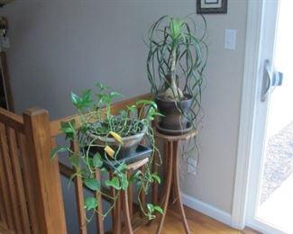 Live Plants & Plant Stands